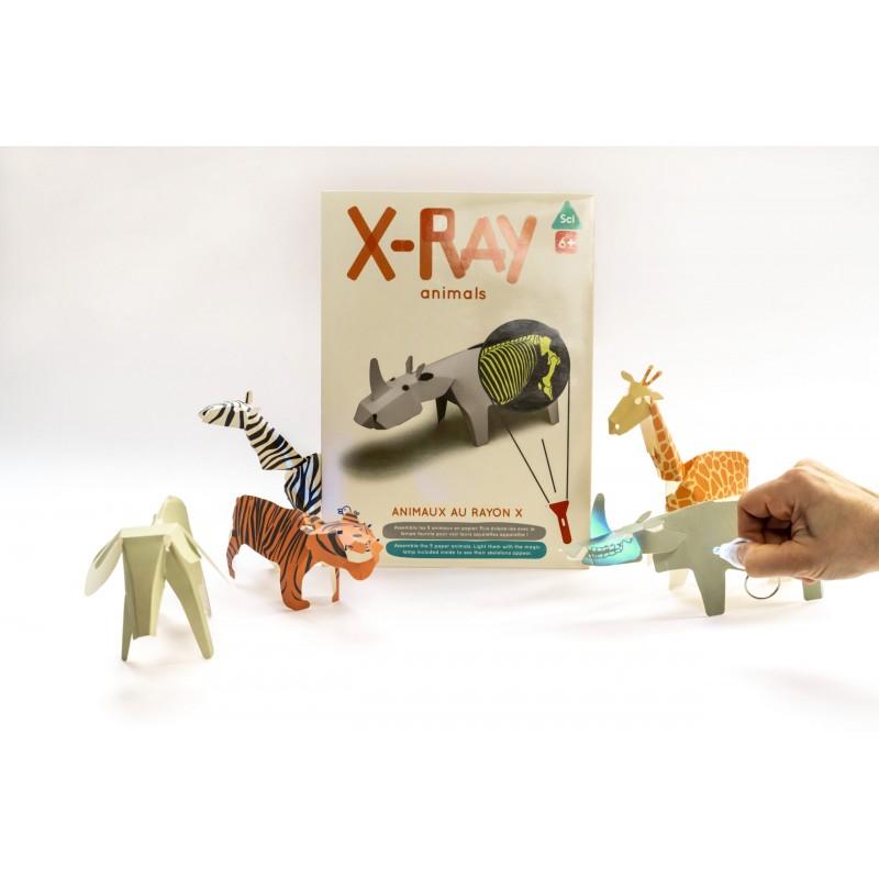 Koa koa Les animaux aux rayons X