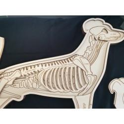 Stuka Puka Puzzle en Bois Anatomie du  Chien